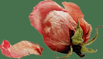 minou-flower-Peach Rose