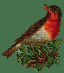 loly33 oiseaux hiver