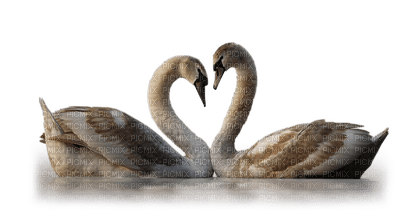 Kaz_Creations Swans Swan Birds