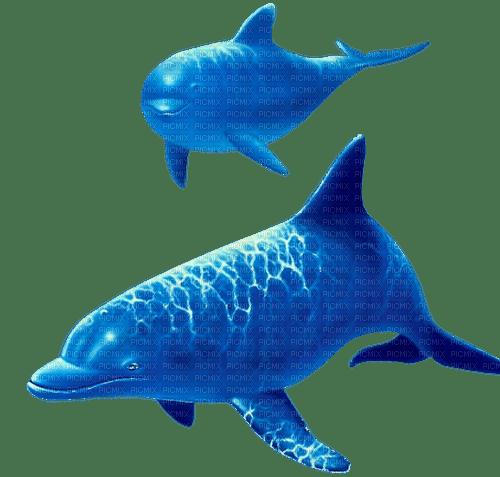 dolceluna blue dolphins summer