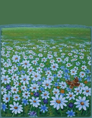 daisy flower landscape paysage