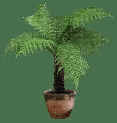plant pot, sunshine3