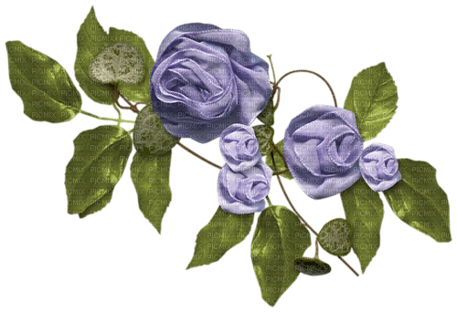 purple flower, rose, sunshine3