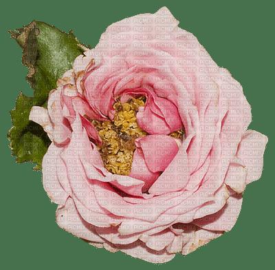 Fleur.Flower.Pivoine.vintage.Victoriabea