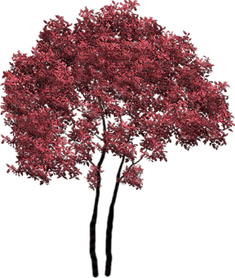 arbre/tree