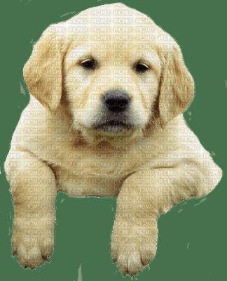 Kaz_Creations Dog Pup 🐶