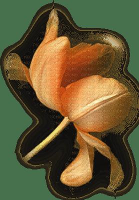 fleur orange.Cheyenne63