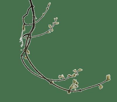 Tube Branche