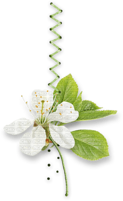 spring flower deco fleur printemps