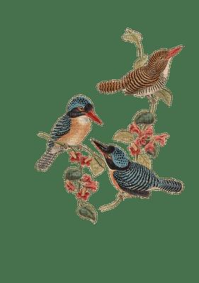 linnut, lintu, bird, vintage