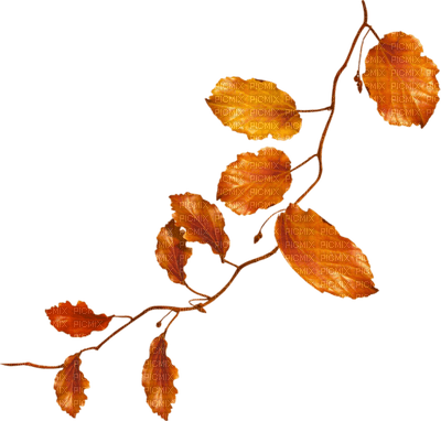 En orange