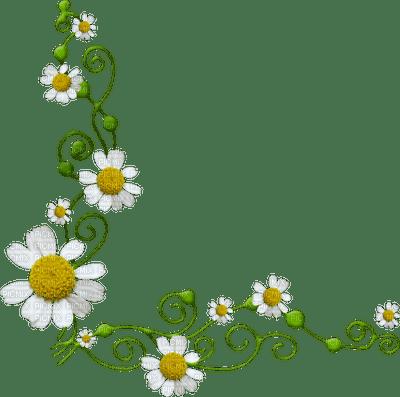 daisy flower border marguerite fleur