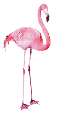 Kaz_Creations Birds Bird Pink Flamingos
