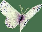 butterflies katrin