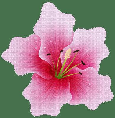 pink lily flower pink fleur lis