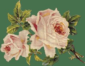 Roses vintage