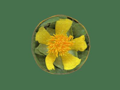 flor amarela1