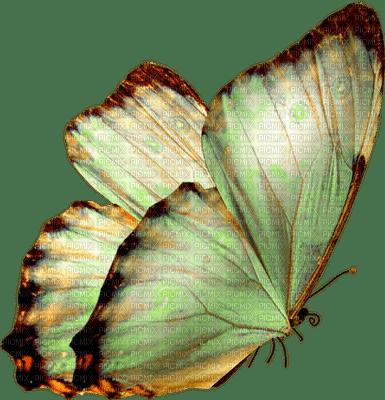 papillon vert.Cheyenne63