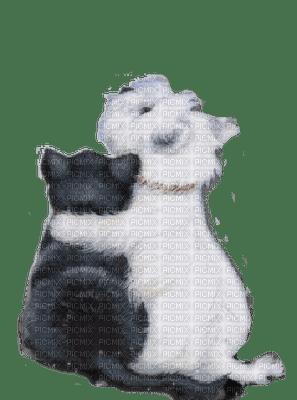 cat dog hugs chat chien amitê
