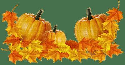 pumpkin citrouille kürbis garden jardin autumn automne herbst tube  leaves deco  feuillage feuilles