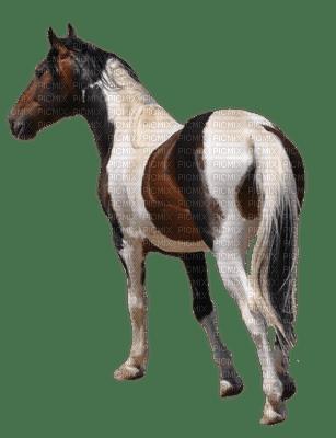 horse katrin