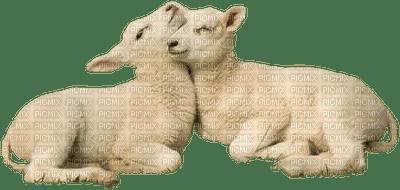 Mouton .S