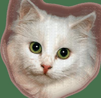 Jolie tête de chat