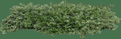Tube Plante Verte