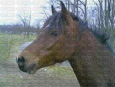 cheval mignon