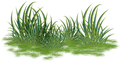 chantalmi   herbe grass