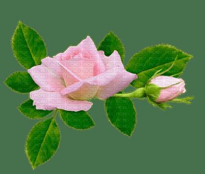 pink roses deco rose pink