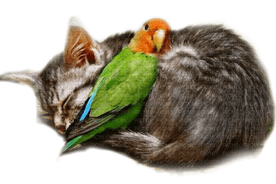 cat and parrot chat perroquet