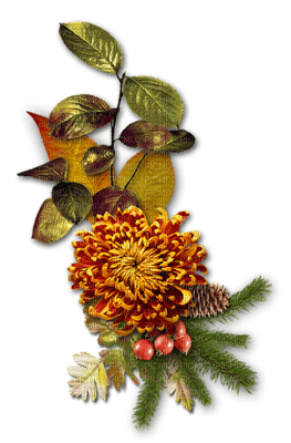 automne plante fleur  branche_ autumn the plant flower  branch