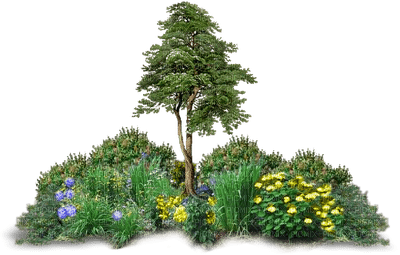 Tree that looks like hydrangea