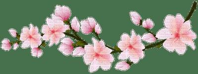 spring branch blossom pink  printemps fleur branche pink