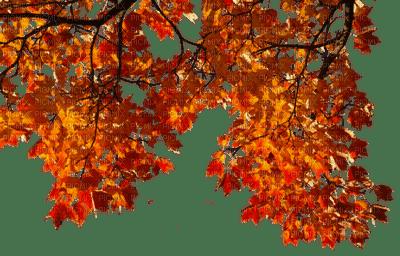 feuilles automne arbre branche autumn leaves tree branch