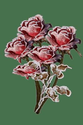 ROSE IN WINTER FLEUR HIVER