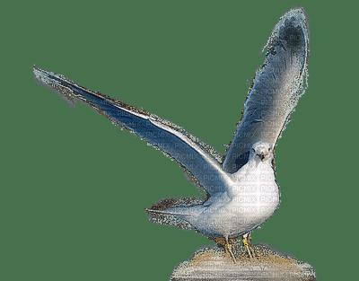 seagull mouette