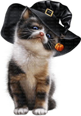 halloween cat witch hat  chat halloween