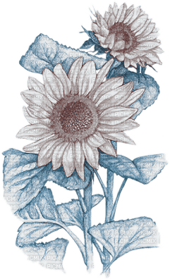 soave deco flowers sunflowers branch blue brown