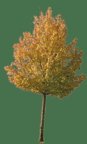 autumn yellow tree, sunshine3