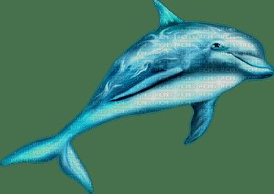fish katrin
