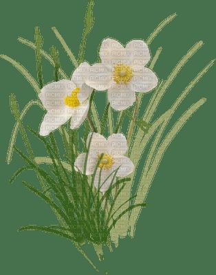 fleur printemps  flowers spring