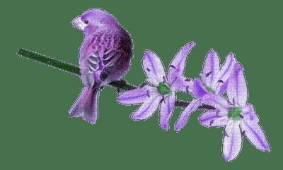 oiseau lavande
