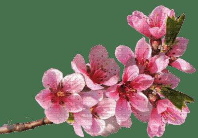 Tube Branche Fleurie