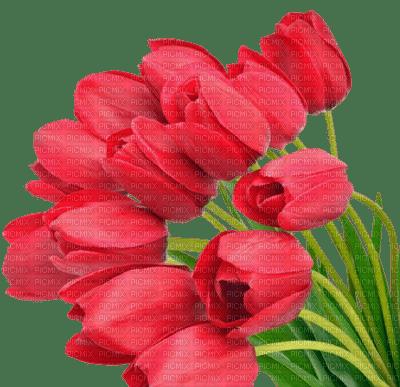tulips flowers spring  tulipes fleurs printemps