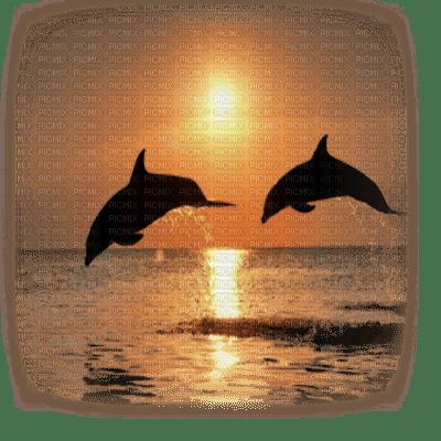 delphin dolphin dauphin sunset
