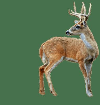 hirsch deer cerf