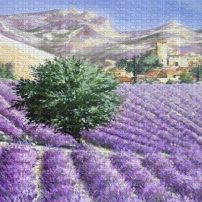 loly33 fond paysage lavande
