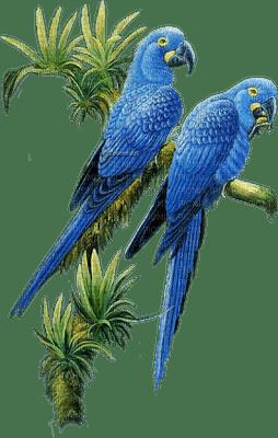 parrot papagei perroquet oiseaux bird vogel blue jungle  spring printemps  deco    summer ete  tube  sommer animal garden jardin garten